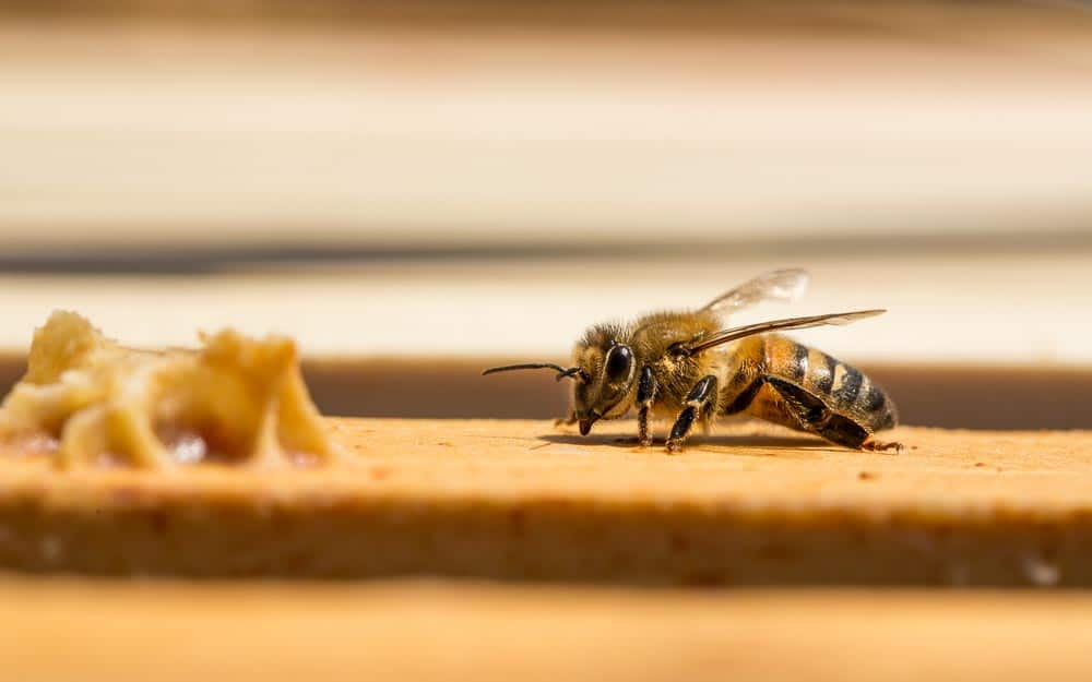 Asheville Commercial Photography - Beekeeping - charlotte, raleigh, knoxville, johnson city, greensboro, chapel hill